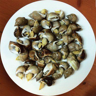 marisco caracolillos de mar
